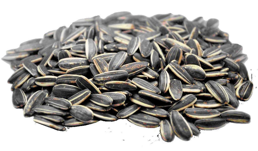 semillasgirasol